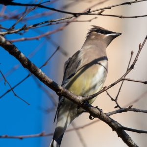 bird possibly saved by glass friendly to birds